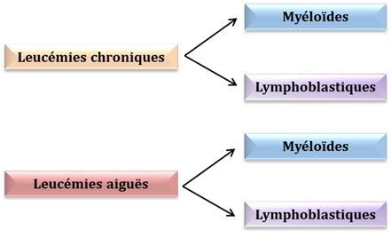 différents types de leucémies
